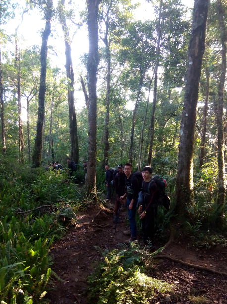Trek trails in the forestof Mount Rinjani Lombok