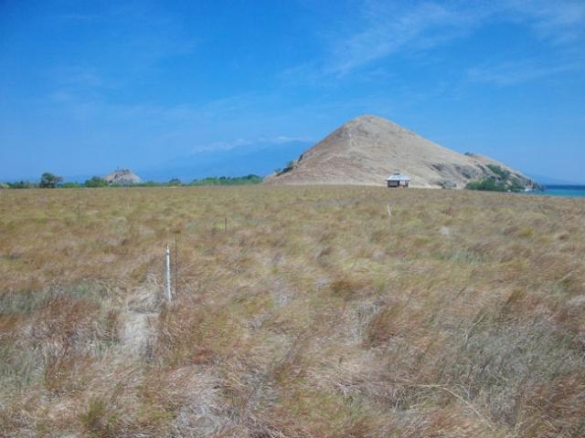 savanna view at kenawa island