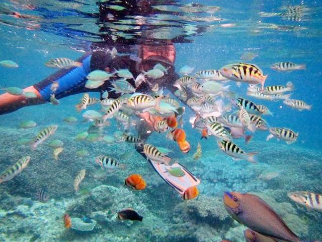 Snorkeling at Gamat Beach point