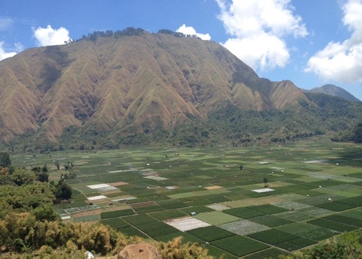 Pergasingan hill view from Sembalun Village